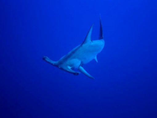 Daedalus Reef – Red Sea