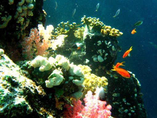 St. John's Reef – Red Sea